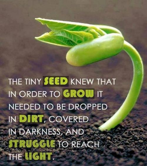 The tiny SEED knew that in order  to  GROW it needed to be dropped in DIRT, covered in darkness, and STRUGGLE to reach the LIGHT....