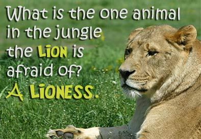 A zooology teacher asks the class 'What is the one animal in the jungle that a lion is afraid of?' The class answers: a lioness.