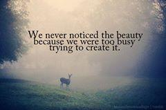 we never noticed the beauty because we were too busy trying to create it..