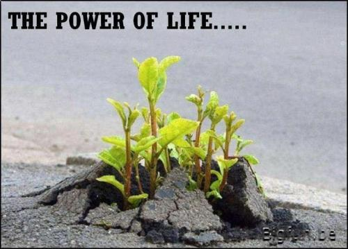 The Power Of LIFE! Survive and Thrive In Adverse Conditions...