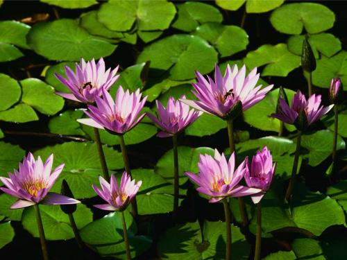 sometimes.. human just like a waterlily.. live in a difficult situation and last have a beautiful flower~