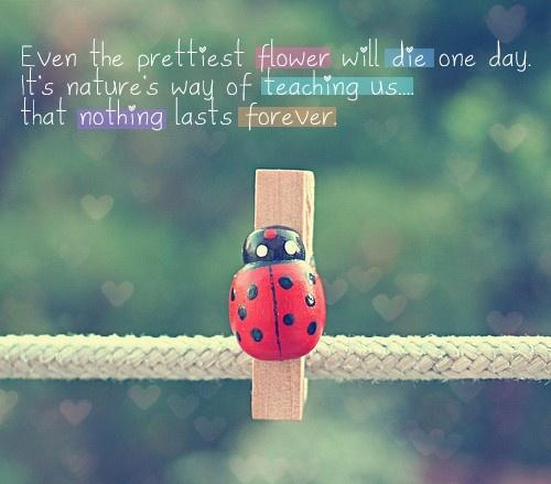 Even the prettiest flower will die one day. It's nature's way of teaching us.... that nothing lasts forever.
