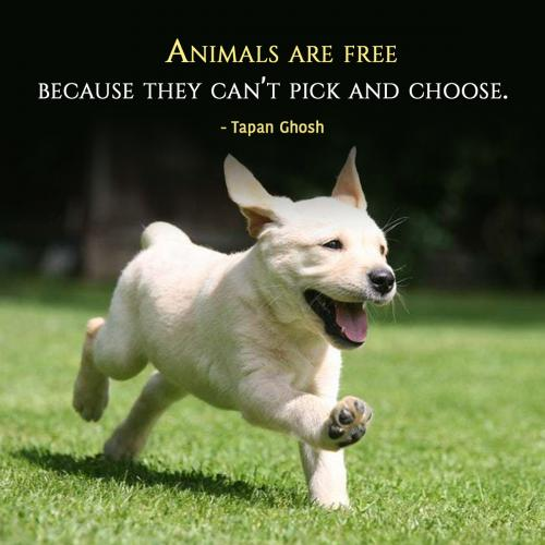 Animals are free because they can't pick and choose.