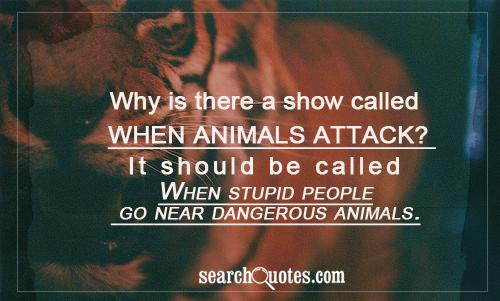 Why is there a show called When animals attack? It should be called When stupid people go near dangerous animals.