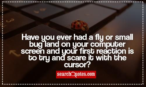Have you ever had a fly or small bug land on your computer screen and your first reaction is to try and scare it with the cursor?