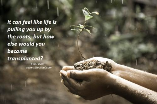 It can feel like life is pulling you up by the roots, but how else would you become transplanted?