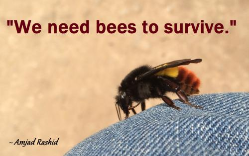 We need bees to survive.