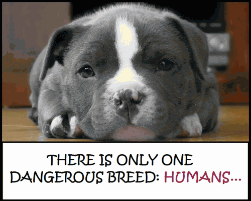 There is only one dangerous breed: HUMANS