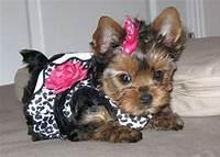 MY DOG PRINCESS AIN SHE GORGEOUS :)
