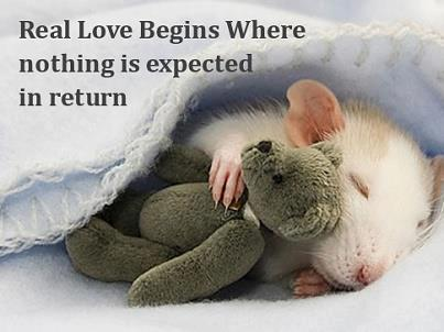 Real love begins where nothing is expected in return...